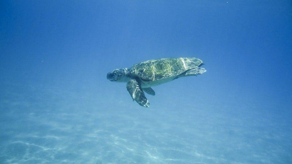turtle-1608044_960_720