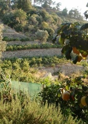 Ikarian Wine